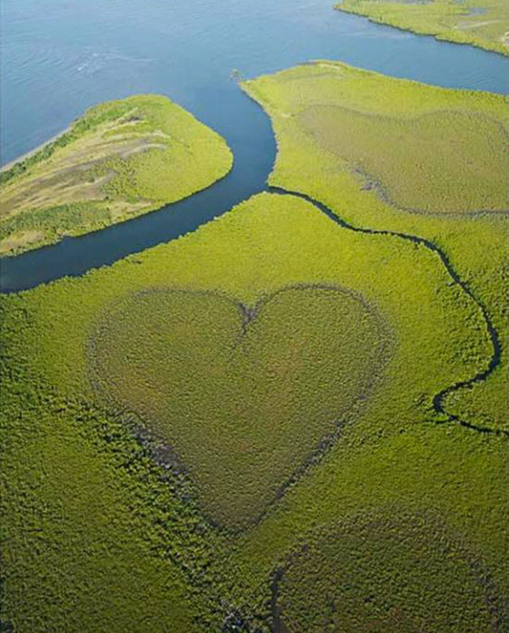 heart-shaped_nature__(2) (563x700, 145Kb)