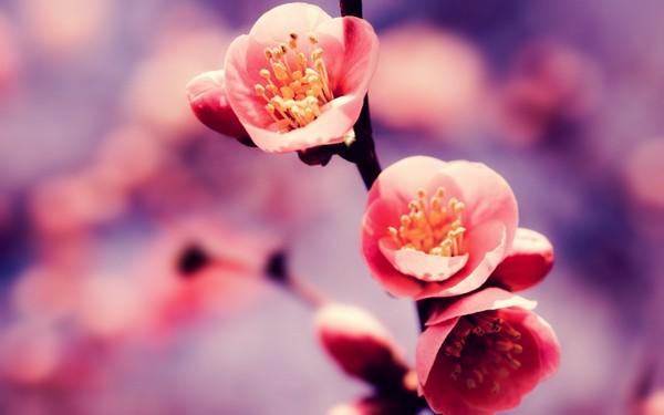 Фотографируем весенние цветы - советы и примеры 1 (600x375, 34Kb)
