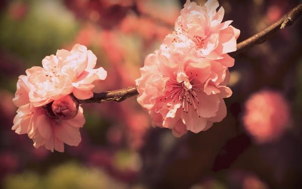 Фотографируем весенние цветы - советы и примеры 26 (600x375, 41Kb)