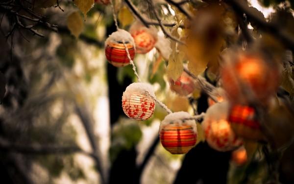 Фотографируем весенние цветы - советы и примеры 28 (600x375, 47Kb)