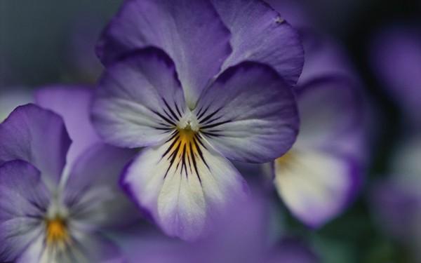 Фотографируем весенние цветы - советы и примеры 38 (600x375, 33Kb)