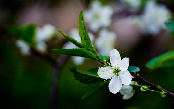 Фотографируем весенние цветы - советы и примеры 40 (600x375, 32Kb)