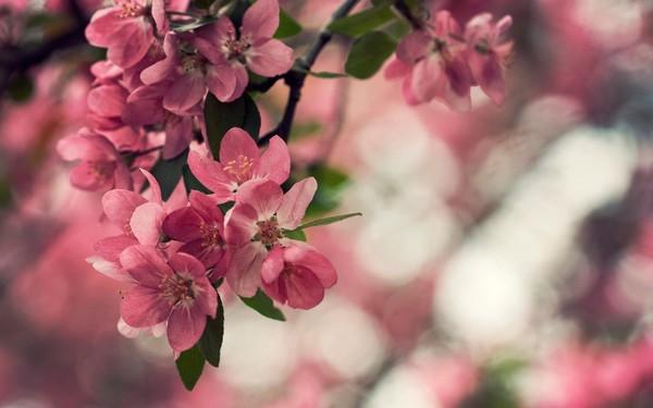 Фотографируем весенние цветы - советы и примеры 42 (600x375, 45Kb)