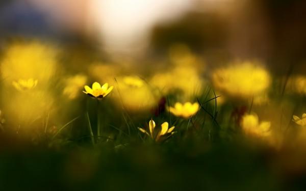 Фотографируем весенние цветы - советы и примеры 50 (600x375, 26Kb)