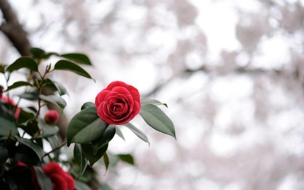 Фотографируем весенние цветы - советы и примеры 51 (600x375, 38Kb)
