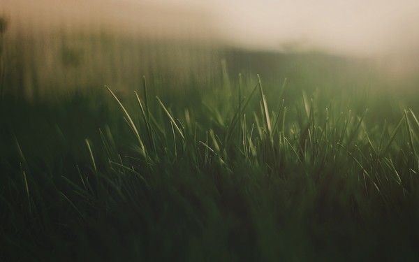 Фотографируем весенние цветы - советы и примеры 53 (600x375, 25Kb)