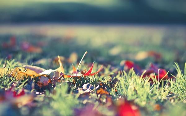 Фотографируем весенние цветы - советы и примеры 7 (600x375, 65Kb)