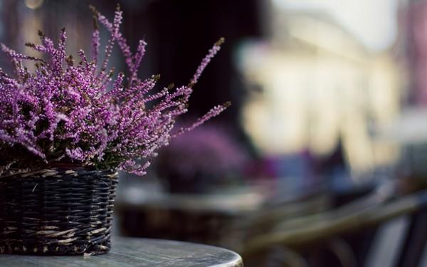 Фотографируем весенние цветы - советы и примеры 9 (600x375, 50Kb)