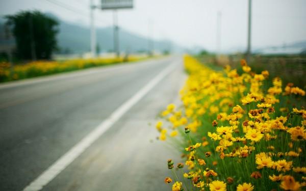 Фотографируем весенние цветы - советы и примеры 12 (600x375, 45Kb)