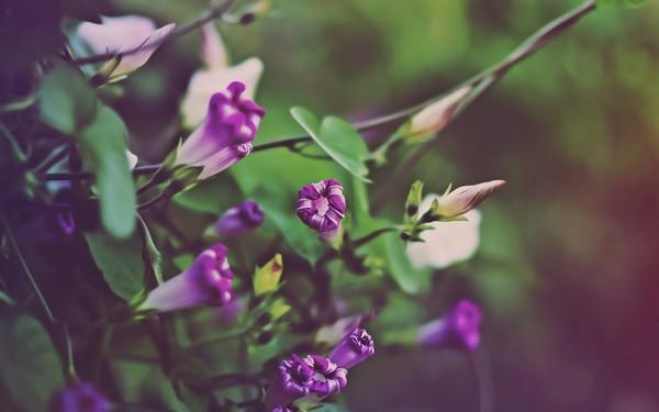 Фотографируем весенние цветы - советы и примеры 20 (600x375, 38Kb)