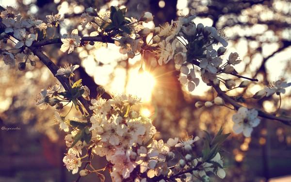 Фотографируем весенние цветы - советы и примеры 22 (600x375, 79Kb)