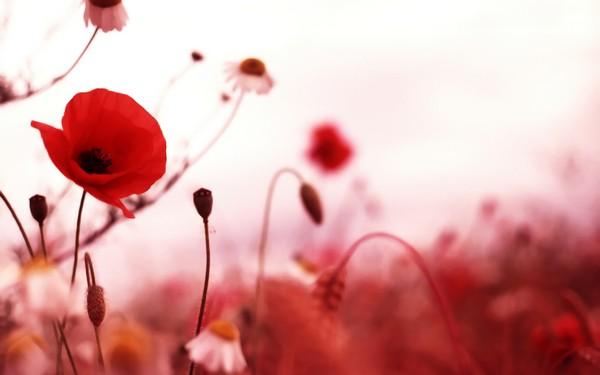 Фотографируем весенние цветы - советы и примеры 24 (600x375, 29Kb)