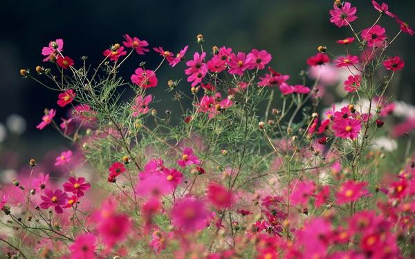 Фотографируем весенние цветы - советы и примеры 34 (600x375, 81Kb)