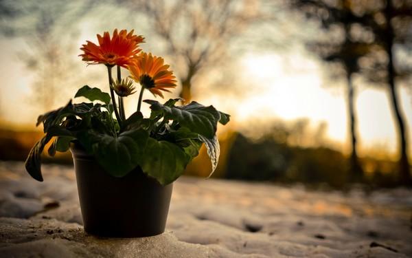 Фотографируем весенние цветы - советы и примеры 35 (600x375, 48Kb)