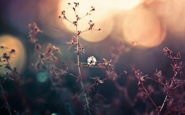 Фотографируем весенние цветы - советы и примеры 43 (600x375, 42Kb)