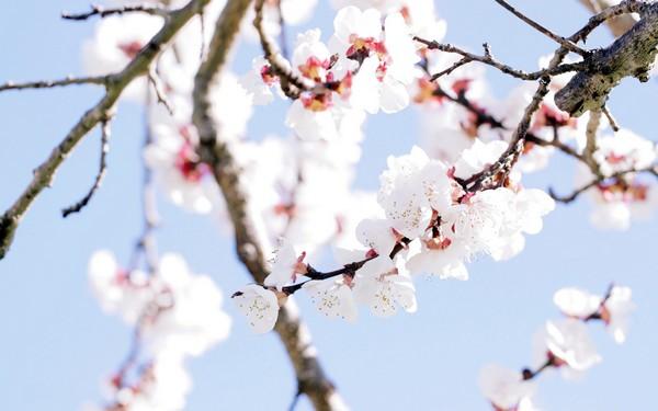 Фотографируем весенние цветы - советы и примеры 45 (600x375, 48Kb)