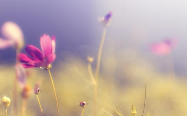 Фотографируем весенние цветы - советы и примеры 55 (600x375, 22Kb)
