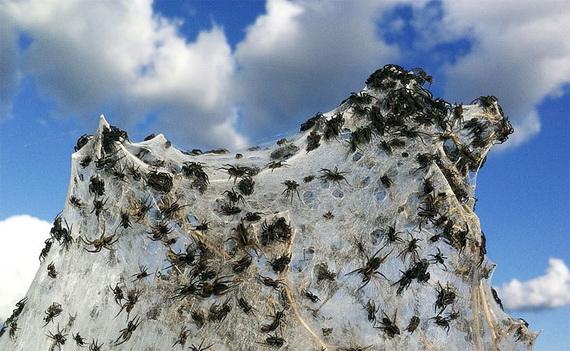нашествие пауков (570x351, 102Kb)