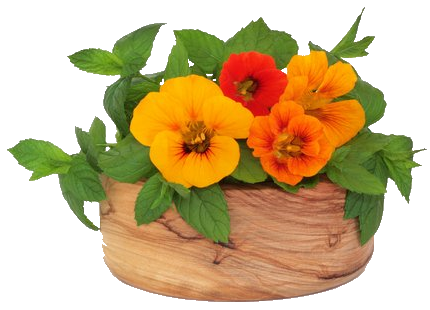 herbal-use-for-nasturtiums (430x310, 218Kb)