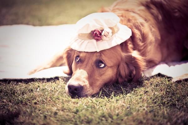 Снимаем портретное фото животных - собаки 8 (600x400, 64Kb)