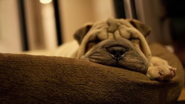Снимаем портретное фото животных - собаки 18 (600x338, 44Kb)