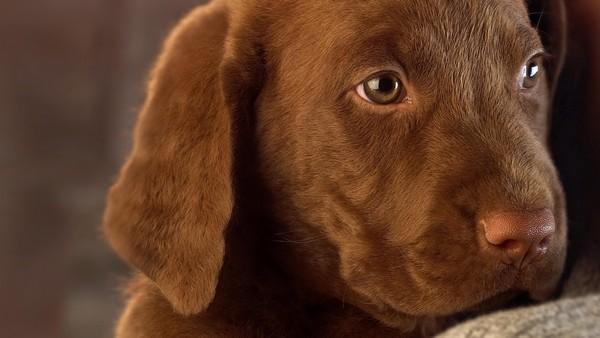 Снимаем портретное фото животных - собаки 20 (600x338, 46Kb)