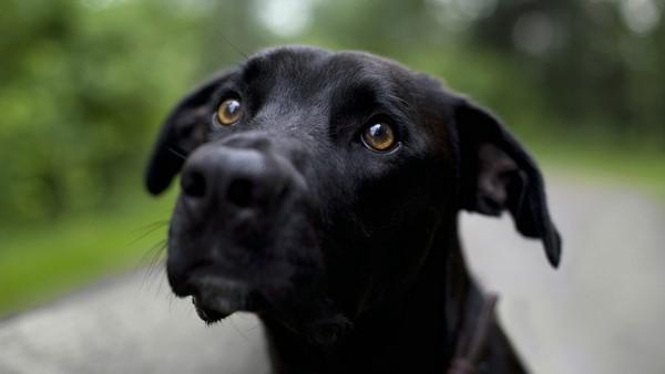 Снимаем портретное фото животных - собаки 35 (600x338, 26Kb)