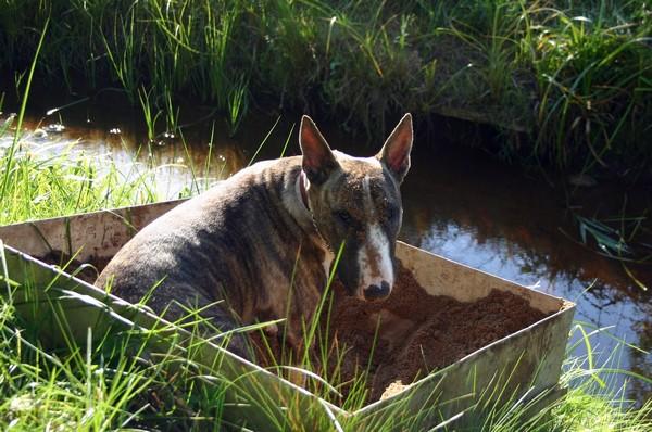 Снимаем портретное фото животных - собаки 41 (600x398, 92Kb)