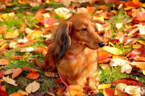 Снимаем портретное фото животных - собаки 43 (600x399, 88Kb)