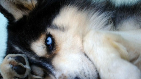 Снимаем портретное фото животных - собаки 47 (600x338, 43Kb)