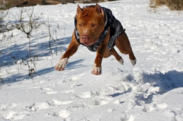 Снимаем портретное фото животных - собаки 52 (600x398, 74Kb)