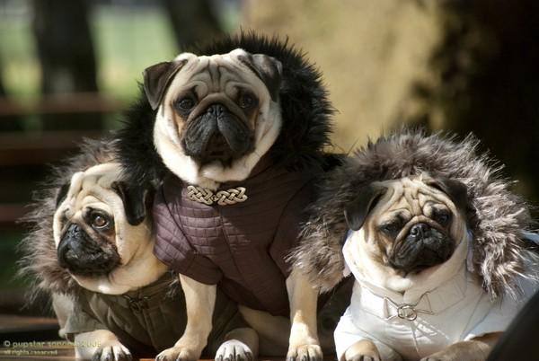 Снимаем портретное фото животных - собаки 56 (600x402, 64Kb)