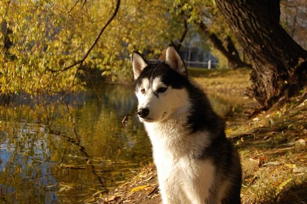 Снимаем портретное фото животных - собаки 58 (600x399, 84Kb)