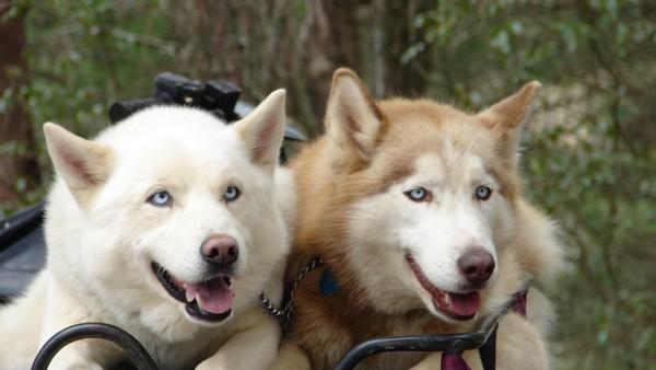 Снимаем портретное фото животных - собаки 59 (600x338, 45Kb)