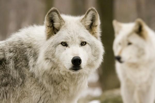 Снимаем портретное фото животных - собаки 61 (600x400, 53Kb)