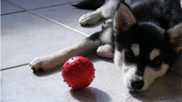 Снимаем портретное фото животных - собаки 67 (600x338, 45Kb)