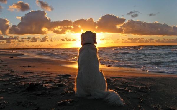 Снимаем портретное фото животных - собаки 71 (600x375, 57Kb)