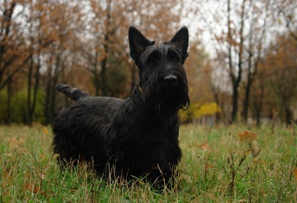 Снимаем портретное фото животных - собаки 73 (600x410, 70Kb)