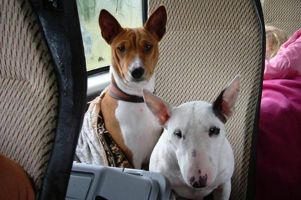 Снимаем портретное фото животных - собаки 75 (600x398, 85Kb)