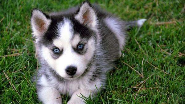 Снимаем портретное фото животных - собаки 89 (600x338, 72Kb)