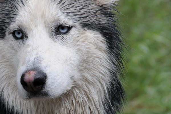Снимаем портретное фото животных - собаки 95 (600x399, 60Kb)
