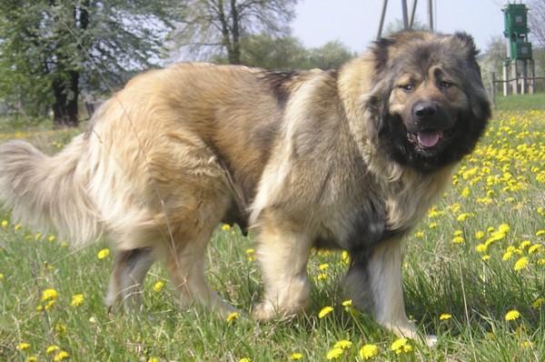 Снимаем портретное фото животных - собаки 97 (600x398, 85Kb)