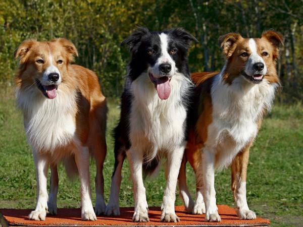 Снимаем портретное фото животных - собаки 99 (600x450, 88Kb)