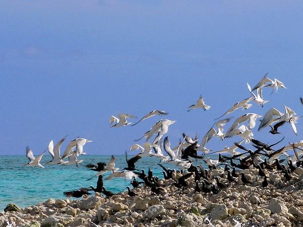 Знаете ли вы какой сезон на Мальдивах самый лучший 12 (600x450, 85Kb)