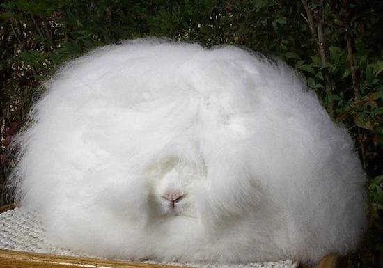 кролик (550x385, 55Kb)