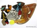Превью butterfly-wings-for-sale (555x416, 140Kb)
