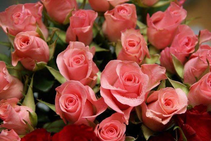 pink-roses-01645 (700x468, 119Kb)