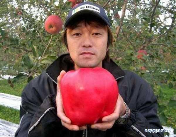 самое большое яблоко/1331836734_1218566573_image00006 (600x467, 53Kb)