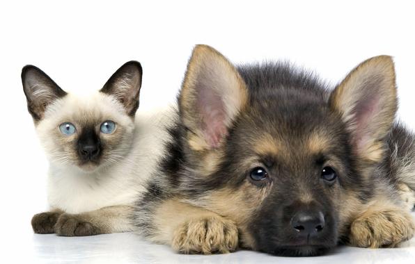 кошки и собаки/3185107_193209 (596x380, 152Kb)