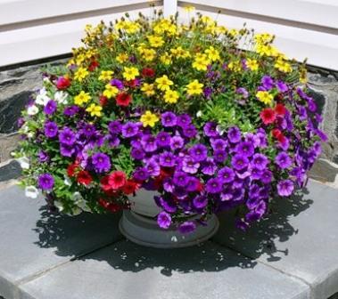 Красивые цветы в вазонах